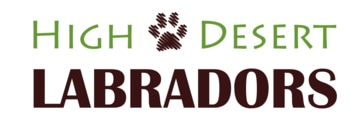 High Desert Labradors - Pure Bred Lab Breeder